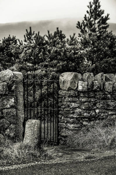 Photograph - Secret Wicket. Black And White. Wicklow by Jenny Rainbow
