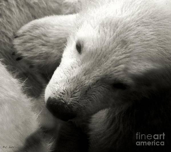 Photograph - Security Blanket by RC DeWinter