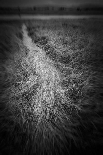 Photograph - Sedge #0193 by Andrey Godyaykin