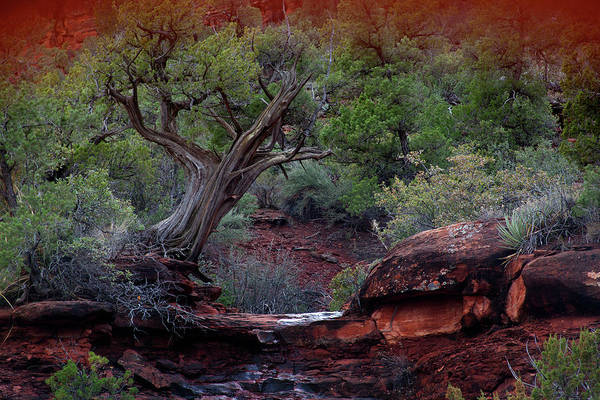 Photograph - Sedona #1 by David Chasey