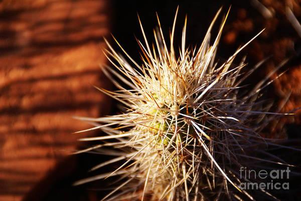 Photograph - Sedona by Linda Shafer