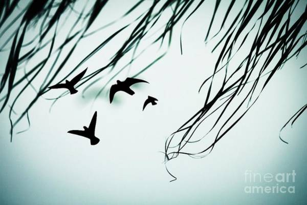 Digital Art - See The Birds by Donna L Munro