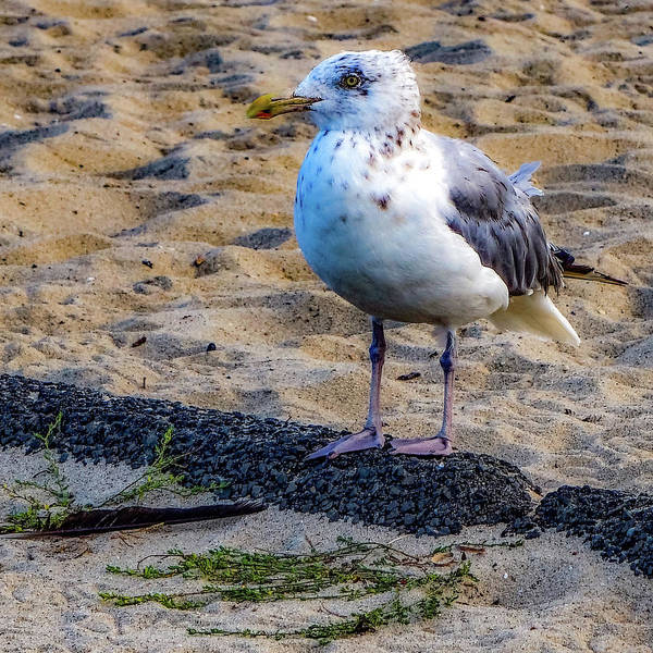 Photograph - See The Gull by Kendall McKernon