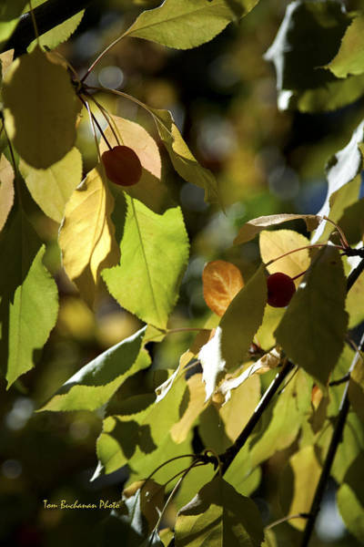 Wall Art - Photograph - Seed Pods In The Fall by Tom Buchanan