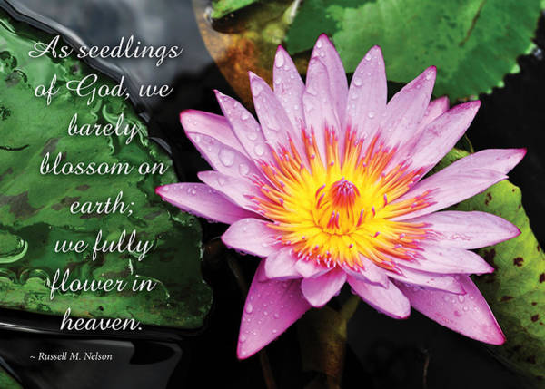 Photograph - Seedlings Of God by Denise Bird