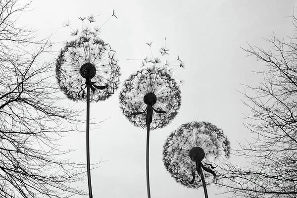 Photograph - Seeds In The Wind by Julia Gavin