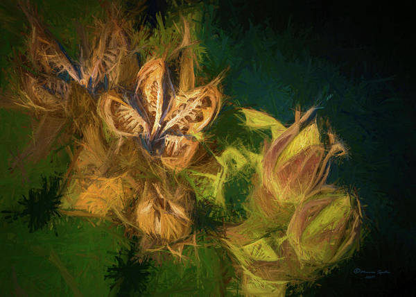 Pod Wall Art - Photograph - Seeds N Buds by Marvin Spates