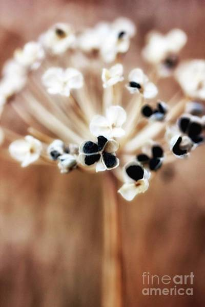Photograph - Stray Bits Of Emphera by Natural Abstract Photography
