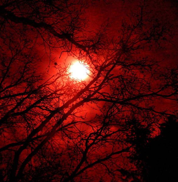 Passionate Photograph - Seeing Red by Angie Wingerd