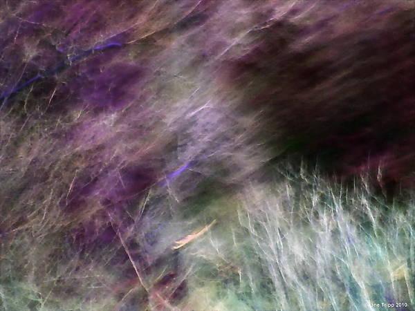 Wall Art - Photograph - Seeking More  by Jane Tripp