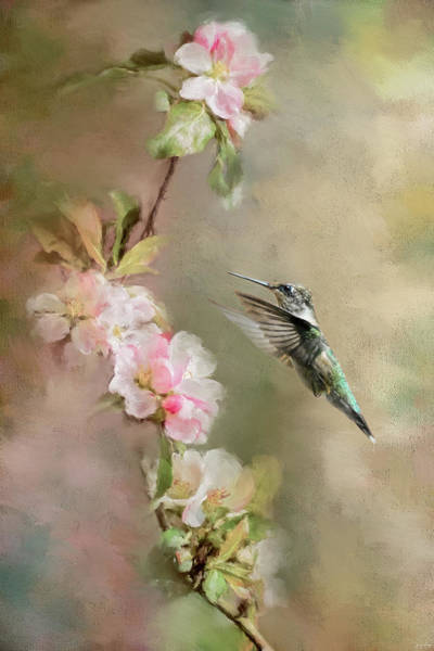 Photograph - Seeking Nectar by Jai Johnson