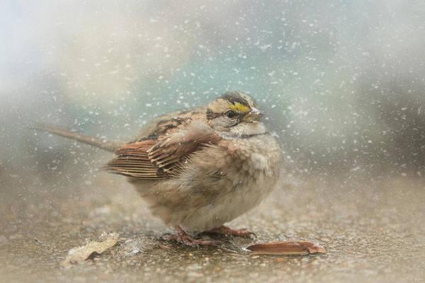 Photograph - Seeking Warmth Songbird Art by Jai Johnson