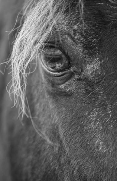 Thru Photograph - Seen Thru The Eye by Karol Livote