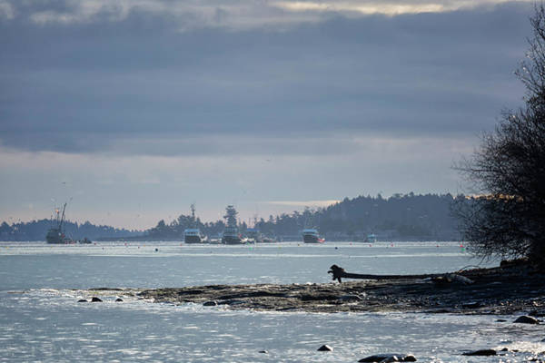 Photograph - Seiners In The Bay 2 by Randy Hall