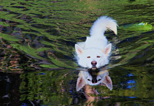 Photograph - Sekani Swimming by Sean Sarsfield