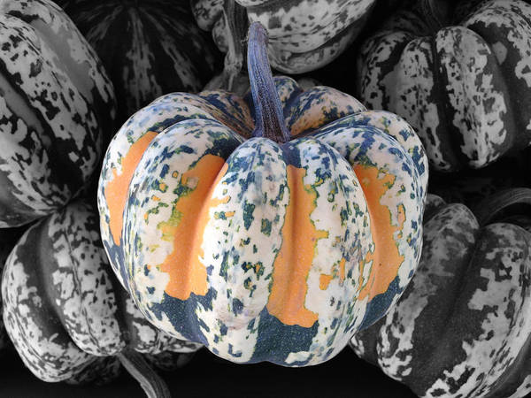 Acorn Squash Photograph - Selective Colored Squash by Brooke Roby