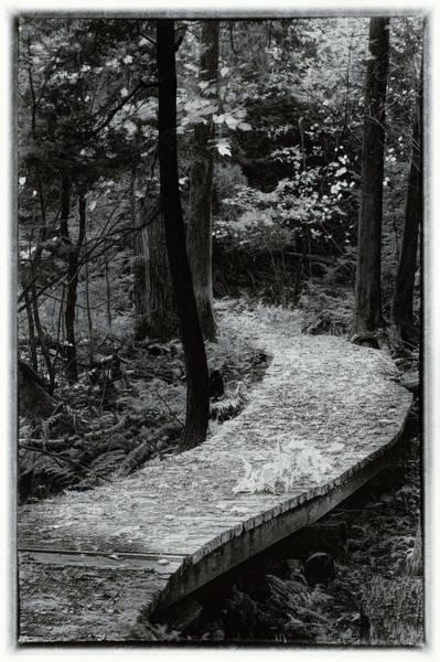 Photograph - Selenium Stroll by David Heilman