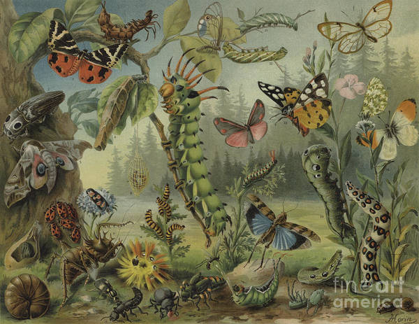 Wall Art - Painting - Self Defense Mechanisms In Insects by German School