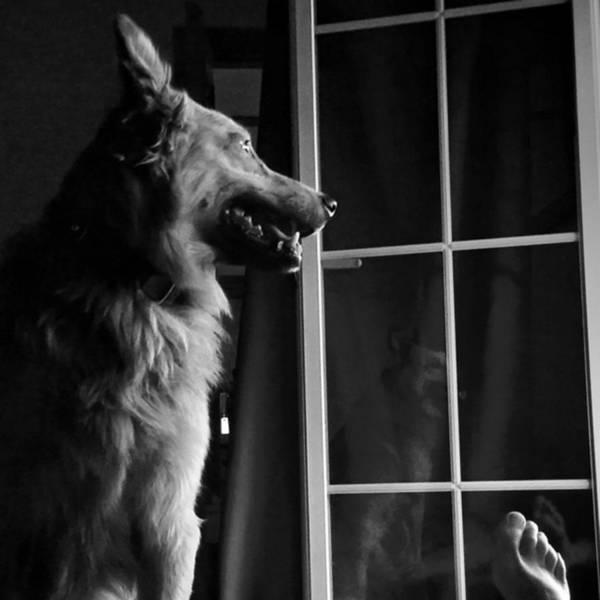 Selfportrait With Chuvak #dog #animal Art Print