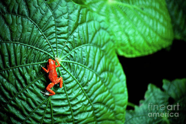 Cesar Wall Art - Photograph - Selva Tropical by Cesar Marino