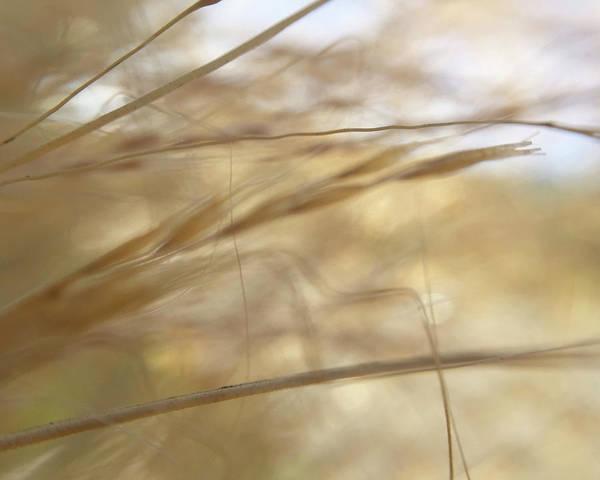 Photograph - Semolina by Michael Van Huffel