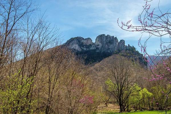 Photograph - Seneca Rocks Spring by Chris Berrier