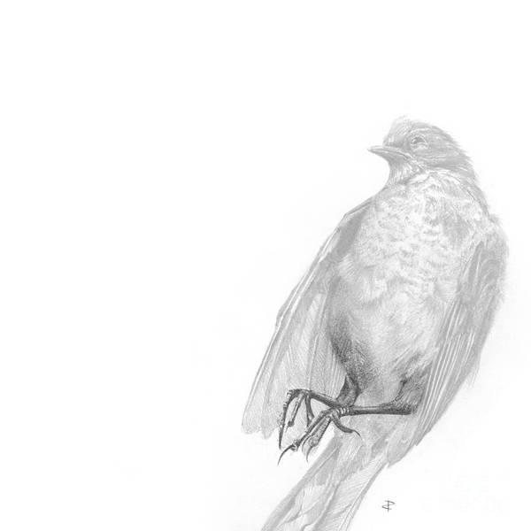 Avian Drawing - Senescence 1 by Paul Davenport