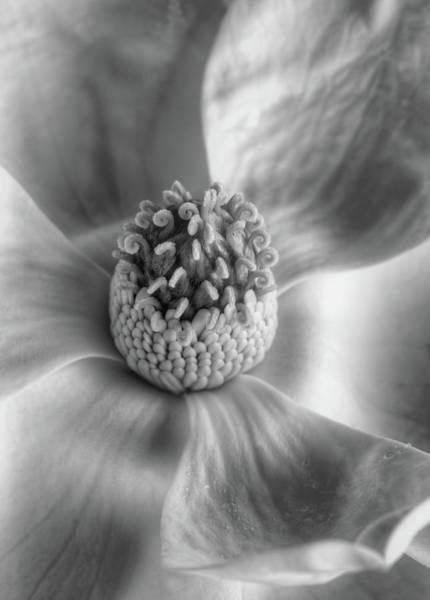 Photograph - Sensitivity  by JC Findley
