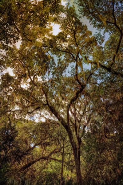 Photograph - Sentient by John M Bailey