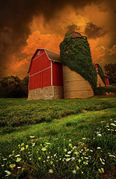 Natur Wall Art - Photograph - Sentient by Phil Koch