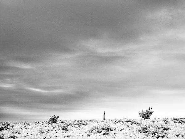 Photograph - Sentinel Against A Winter Sky by Mary Lee Dereske