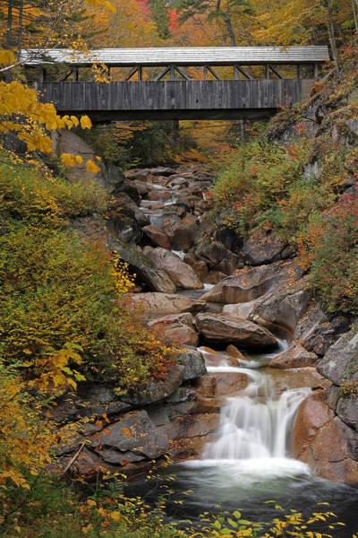 Photograph - Sentinel Pine Bridge by Juergen Roth