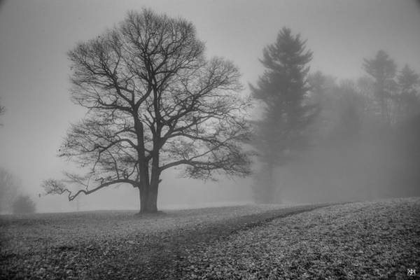 Photograph - Sentinel Tree by John Meader