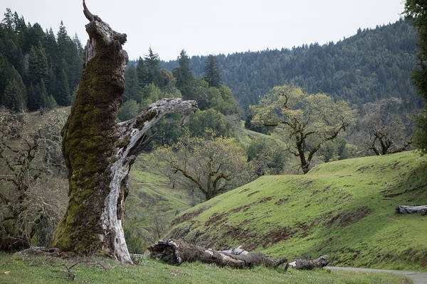 Photograph - Sentinel Tree by Peter Dyke