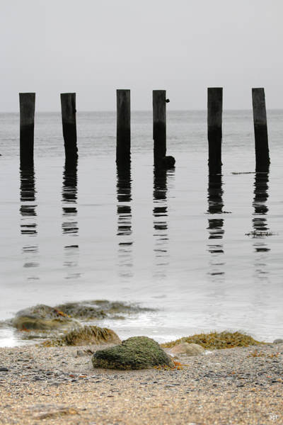 Photograph - Sentinels by John Meader