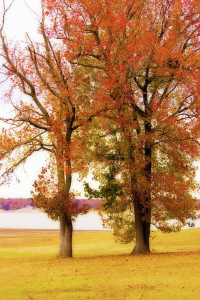 Photograph - Sentinels - Lakeside Landscape by Barry Jones