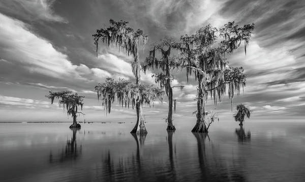 Photograph - Sentinels Of Lake Maurepas by Andy Crawford