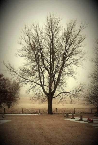 Wall Art - Photograph - Sentry Tree by Toni Grote