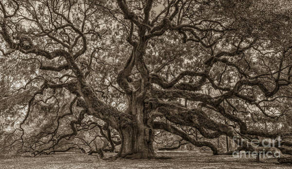Photograph - Sepia Angel Oak Mod by Dale Powell