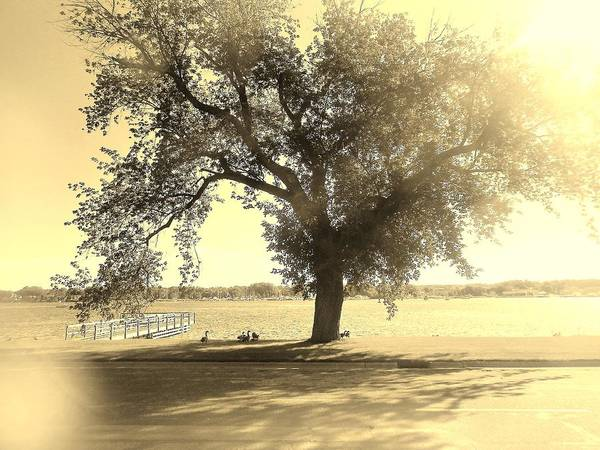 Photograph - Sepia Colors In A Tree by Jake Whalen