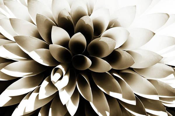 Photograph - Sepia Dahlia by Marilyn Hunt