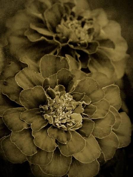 Photograph - Sepia Marigolds by Patricia Strand