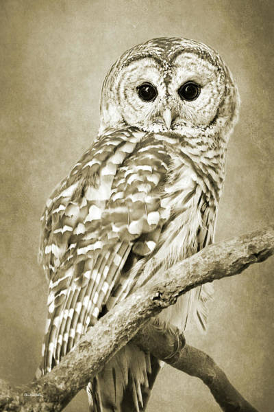 Wall Art - Mixed Media - Sepia Owl by Christina Rollo