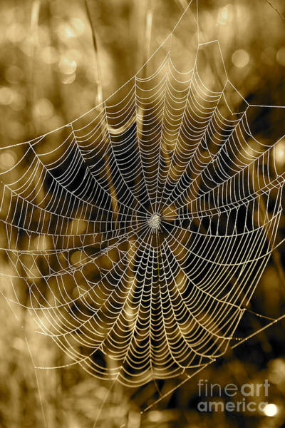 Photograph - Sepia Spider Web by Carol Groenen