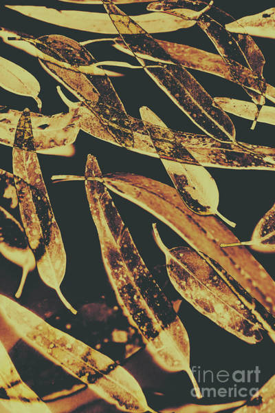 Dark Background Photograph - Sepia Toned Image Of Floating Eucalyptus Leaves by Jorgo Photography - Wall Art Gallery