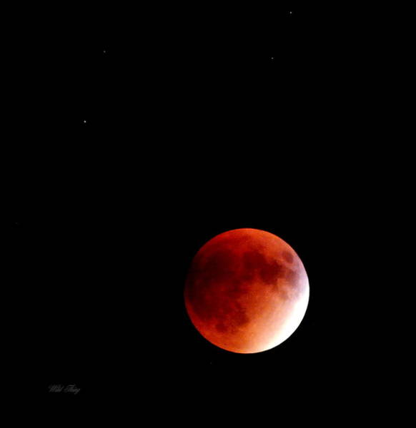 Photograph - September Bloodmoon 2015 by Wild Thing