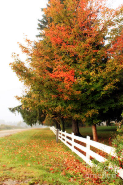 Photograph - September Morning by Cathy Beharriell
