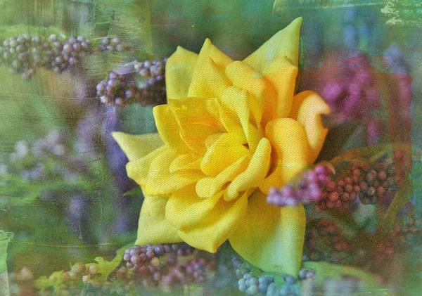 Wall Art - Photograph - September Rose by Kathy Bucari