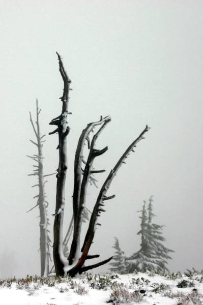 Photograph - September Snow by Albert Seger