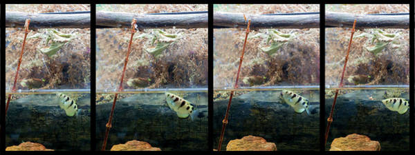 Photograph - Sequence - On The Prey by Dan Friend